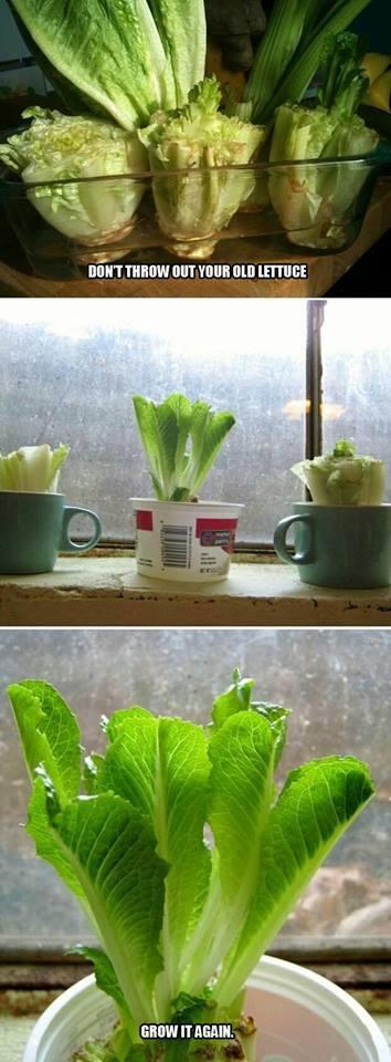 cara menanam biji sayuran dan buah 3
