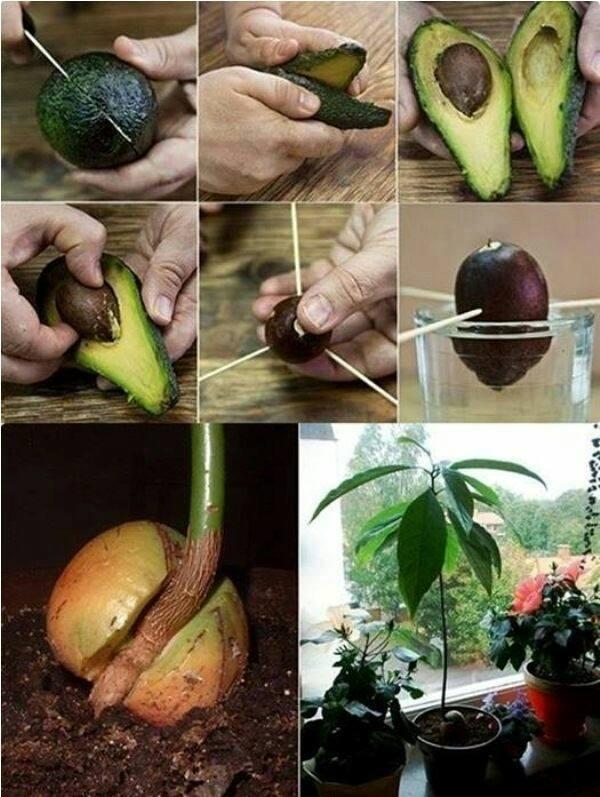 cara menanam biji sayuran dan buah 5