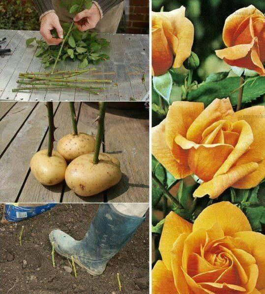 cara menanam biji sayuran dan buah 6