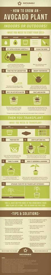 cara menanam biji sayuran dan buah 8