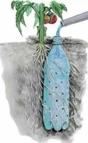 cara menanam biji sayuran dan buah 9