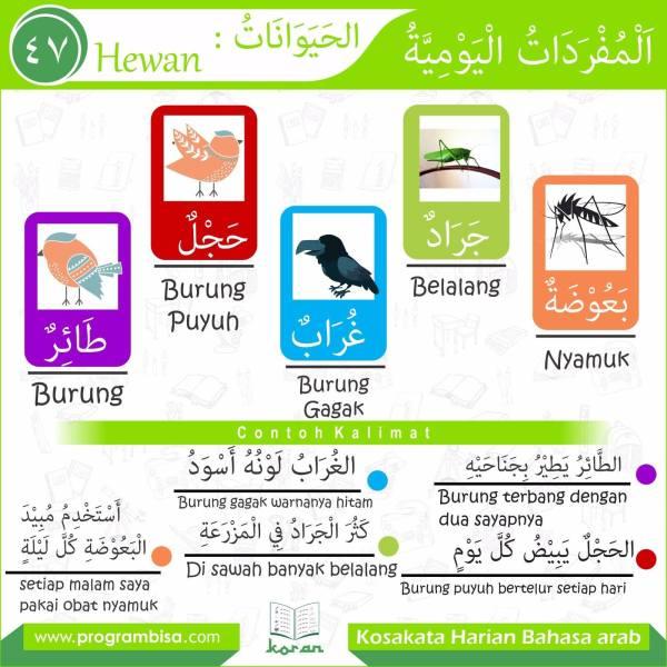 kosakata harian bahasa arab 47